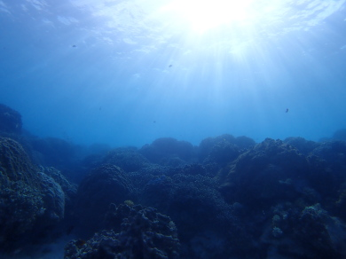 ビーチで体験ダイビング~