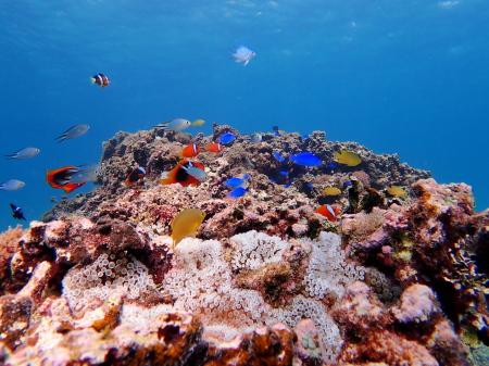 伊良部島で体験ダイビング。