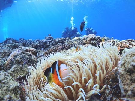 体験ダイビング、宮古島でできること!