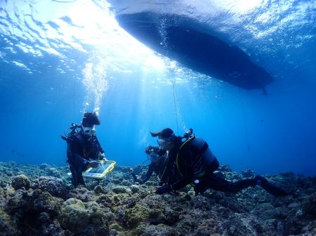 コンタクトしたまま体験ダイビングできるますか?